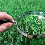 Діяльність Української лабораторії якості і безпеки продукції АПК щодо забезпечення органічного землеробства