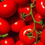 У квітах і томатах, які імпортувалися в Україну, виявлені карантинні організми. Вантажі затримані