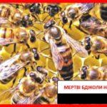 Боротьба за бджіл триває: висновки науковців університету